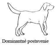 Dominantný pes