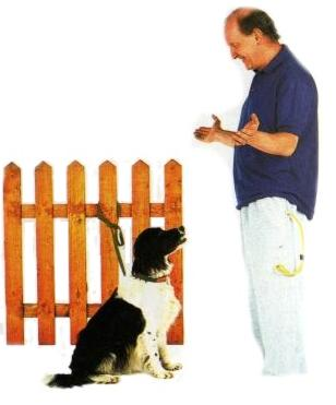 Správanie psa